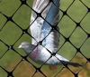 Bird-X Bird Netting Safely blocks pest birds from entering gardens, buildings or areas where they are unwelcomed